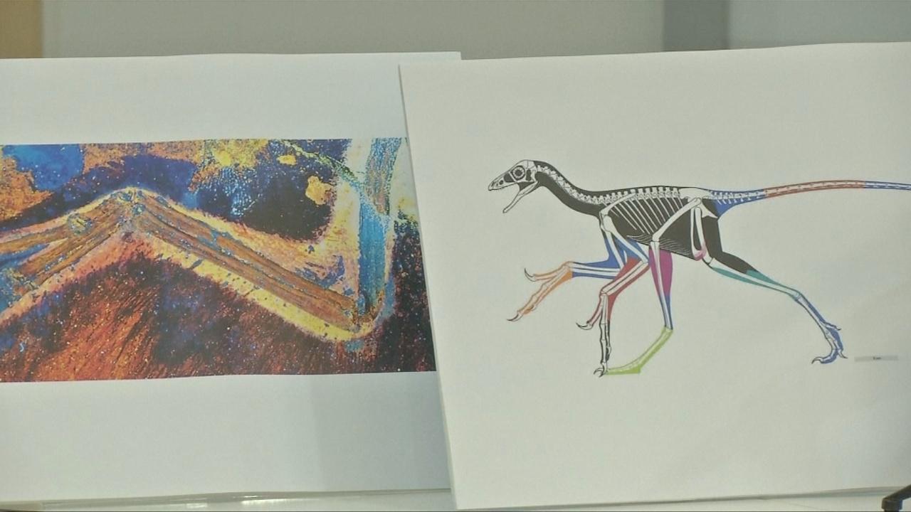 Мягкие ткани на костях динозавра обнаружили благодаря лазеру