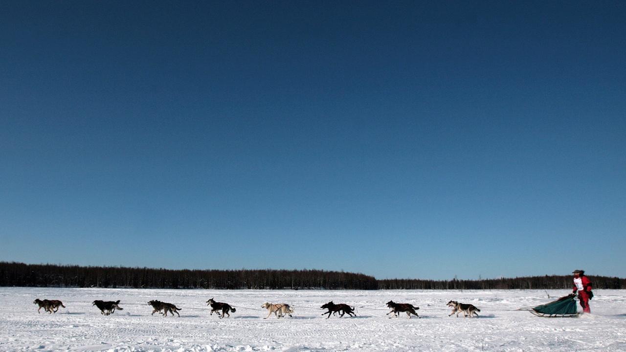 Знаменитая гонка на собачьих упряжках стартовала на Аляске