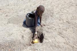 ООН: миллионам кенийцев угрожает голод из-за засухи