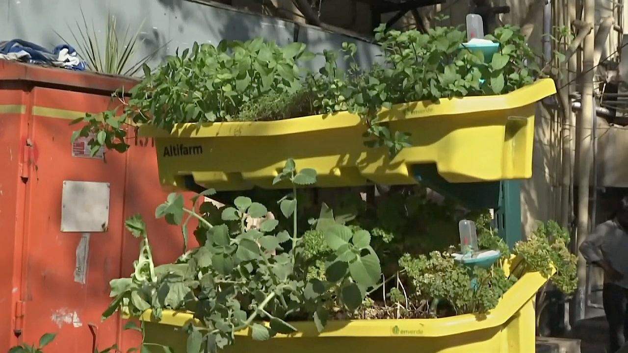 «Умные» вертикальные фермы вдохновляют горожан на садоводство