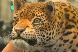 Зачем робот-леопард появился в центре Лондона?