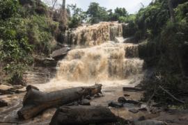 Гана: упавшим деревом убило 20 школьников