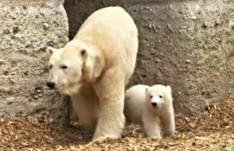 Белому медвежонку в зоопарке Мюнхена дали имя