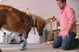 Ортопед из США делает протезы для животных