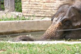 Животных в зоопарке Бангкока спасают от жары
