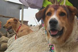 На месте оползня в Колумбии собирают домашних животных