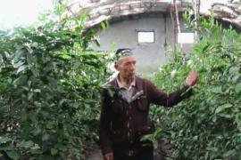 Узбекских фермеров снабжают саженцами лимона и курами