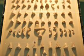 В датском музее создали коллекцию мраморных носов и ушей
