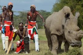 Зачем на сайте знакомств разместили объявление носорога?