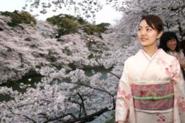 Токийцы идут в парки любоваться цветением сакуры