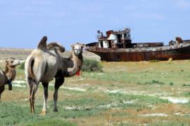 Где находится самая быстрорастущая пустыня в мире?