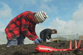 Шведские фермеры выращивают овощи прямо в городе