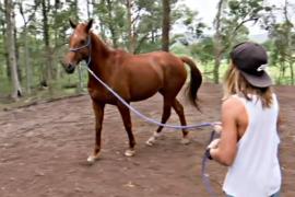 Лошади помогают детям исцелиться от душевных травм