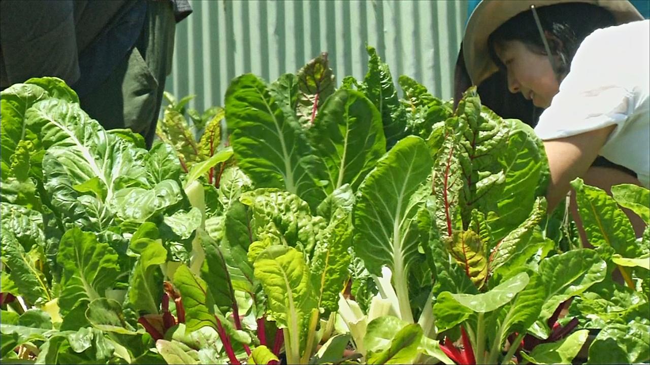 В США спасают овощи от гибели в помойке