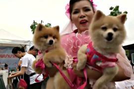 Сотни собак в Бангкоке пробежали благотворительный кросс