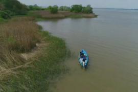Озеро в Польше очищают с помощью рыбы