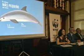 WWF: популяция калифорнийской морской свиньи может исчезнуть