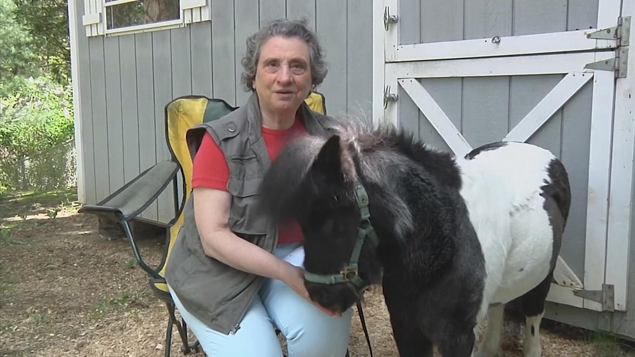 Слепая женщина потратила все деньги на лечение лошади-поводыря