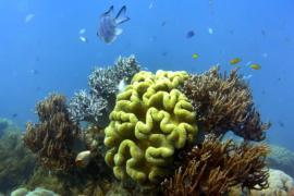 В ООН обсуждают, как защитить мировой океан