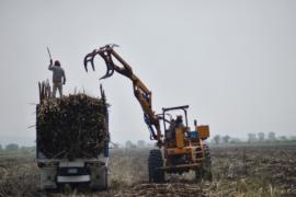 Мексиканские производители сахарного тростника боятся за своё будущее