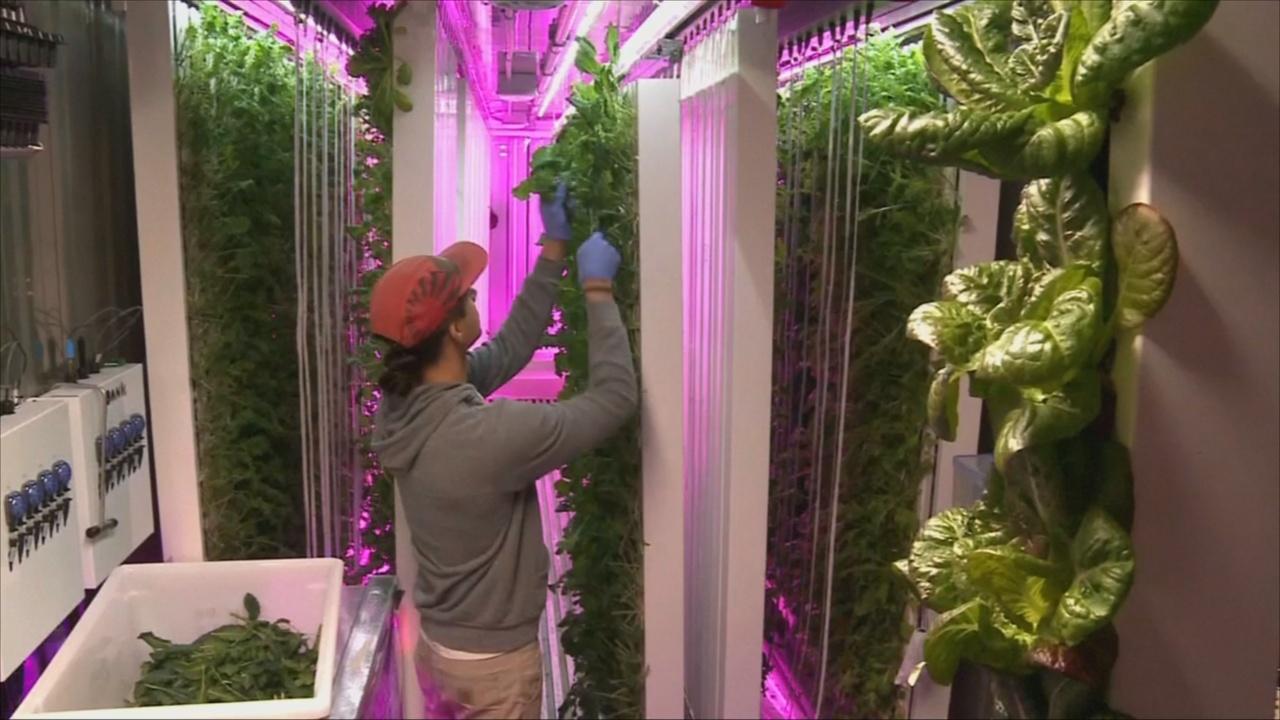 В Нью-Йорке развивается городское фермерство