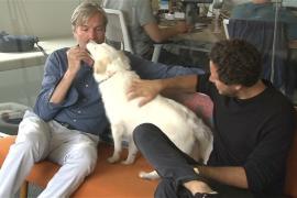 Калифорнийцы ходят на работу с собаками, чтобы снять стресс