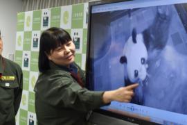 Большая панда принесла детёныша в зоопарке в Токио