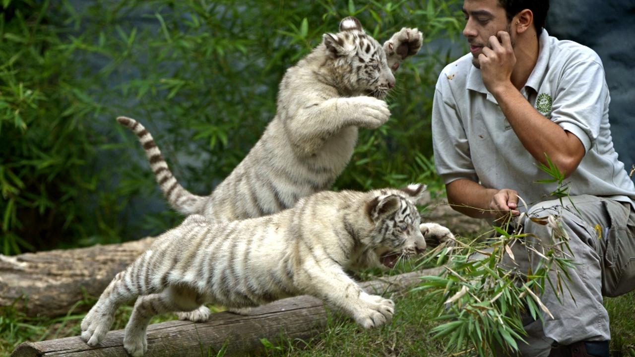 Старинный зоопарк в Буэнос-Айресе превратят в экопарк