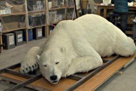 Японцы сделали реалистичного искусственного белого медведя