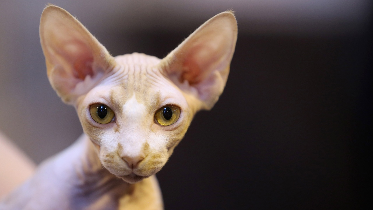 Кошка стала компаньоном человека тысячи лет назад