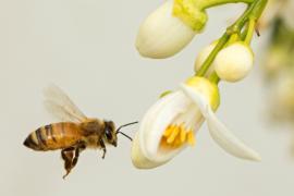 Пчёлы-беженцы поселились у штаб-квартиры ООН