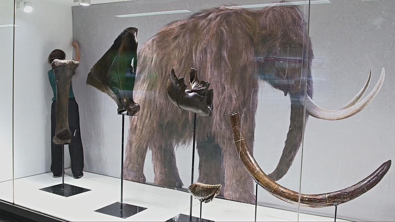 Обновлённые кости мамонта выставили на ЖД-станции в Брюсселе