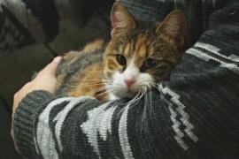 Чилийское котокафе подыскивает хозяев бездомным кошкам