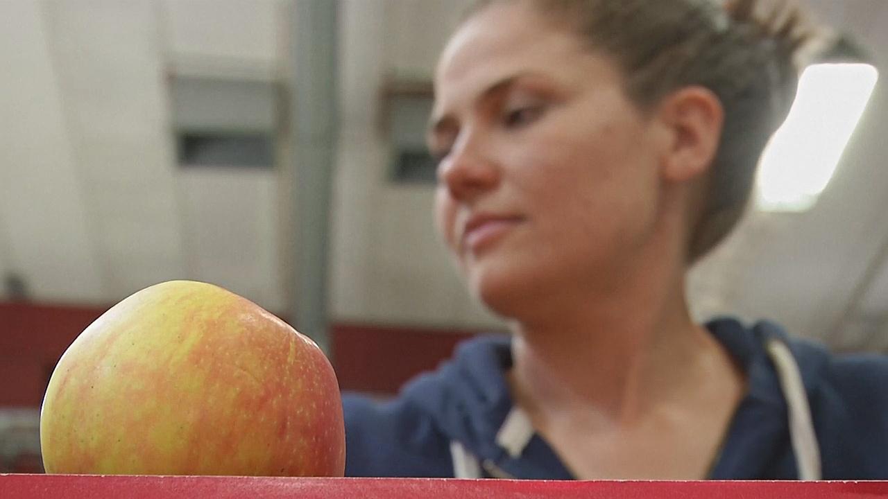 Шведский стартап «спасает» непроданные фрукты
