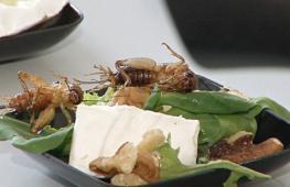 Учёные считают съедобных насекомых ответом на нехватку еды в будущем