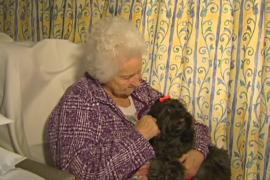 К пожилым пациентам в Австралии привозят домашних питомцев