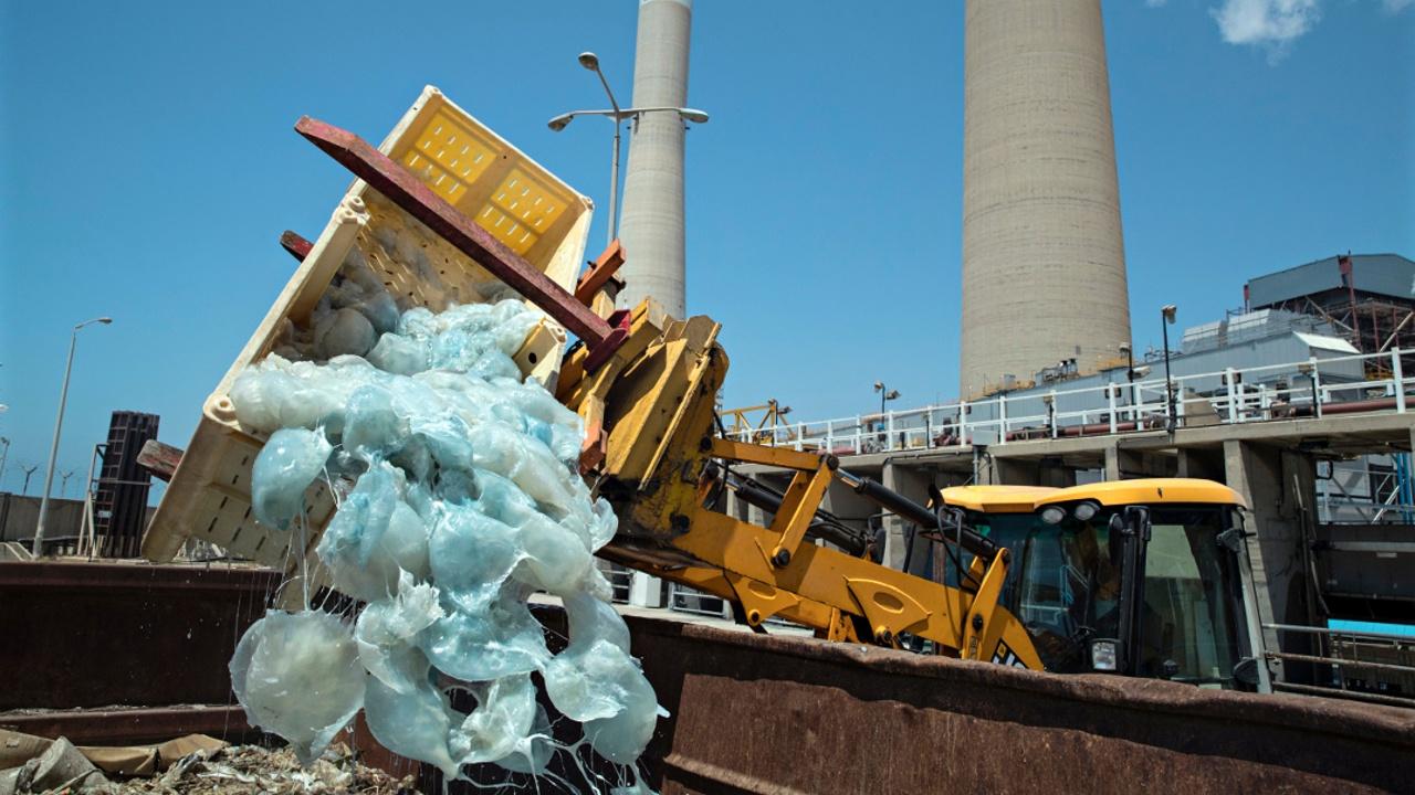 Крупнейшая израильская электростанция страдает от наплыва медуз