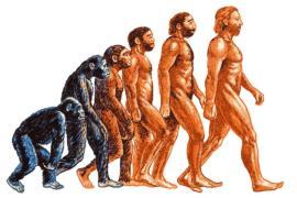 В школах Турции больше не будут рассказывать о теории эволюции Дарвина