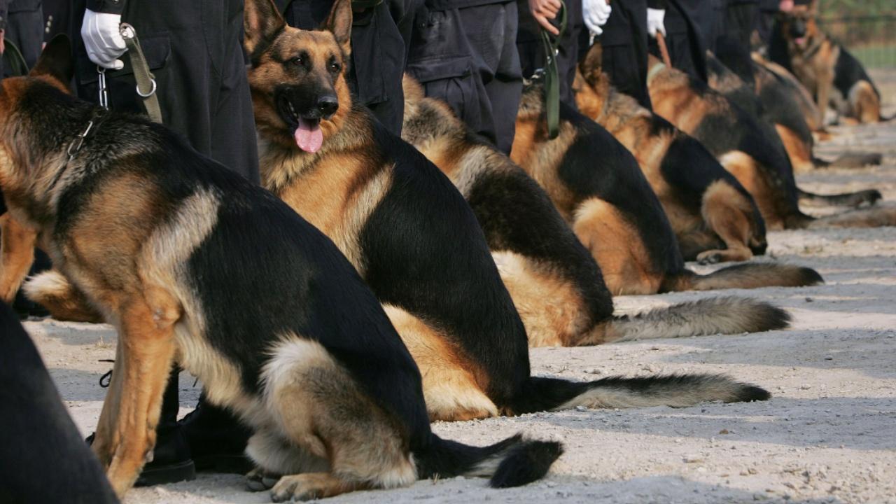 В Эквадоре 16 собак-полицейских вышли на пенсию
