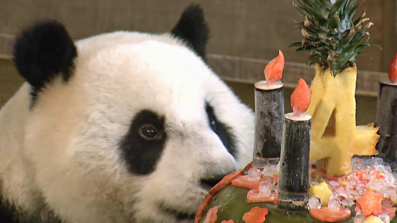 Тайвань: большой торт для большой панды