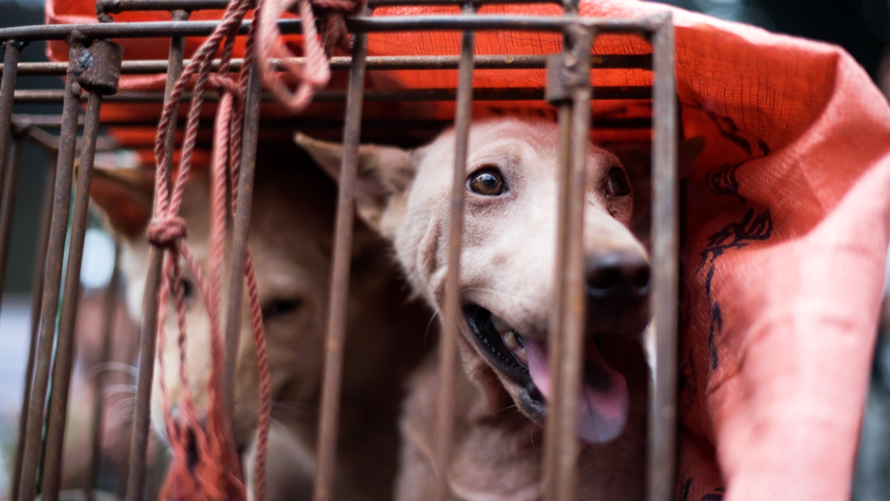 Защитники животных: туристам на Бали продают собачье мясо