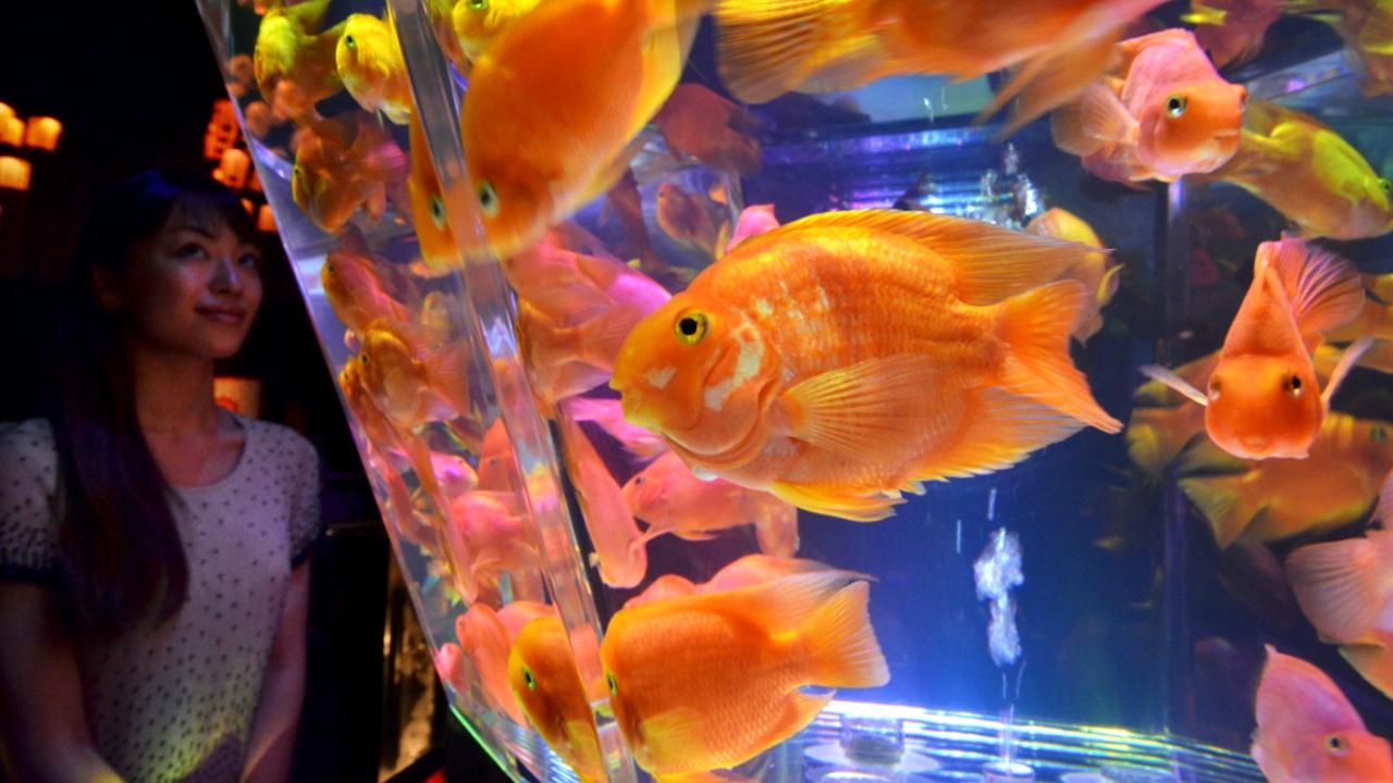 Тысячи золотых рыбок стали частью «живой» инсталляции в Токио