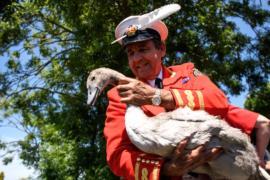 На Темзе пересчитывают лебедей королевы