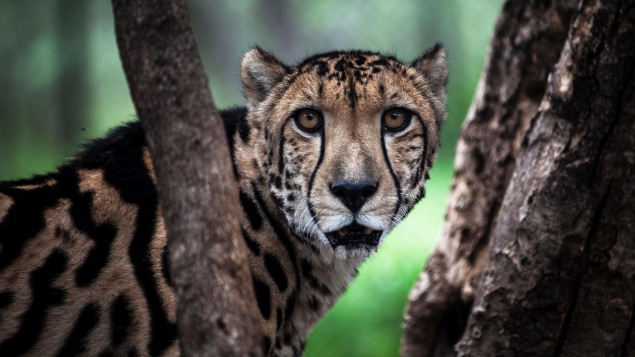 Учёные: на Земле происходит шестое массовое исчезновение видов животных