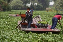 Шеф-повара покупают овощи, выращенные на плавучих островах ацтеков