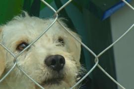 Метро Мехико открыло приют для бездомных собак