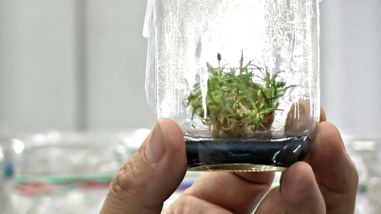 Учёные обнаружили «солнечные фильтры» в растениях Антарктиды