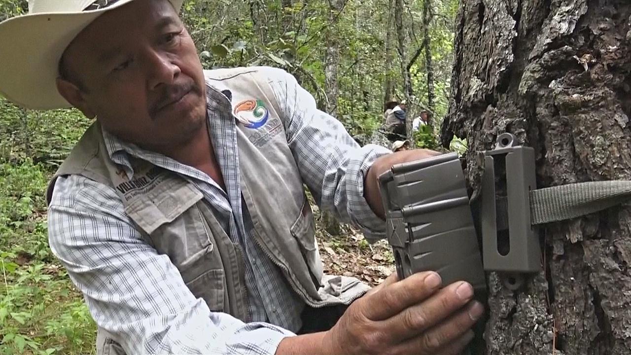 Индейцы создали охраняемый заповедник в штате Оахака