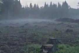 Польша проигнорирует решение Суда ЕС и продолжит вырубку в Беловежской пуще