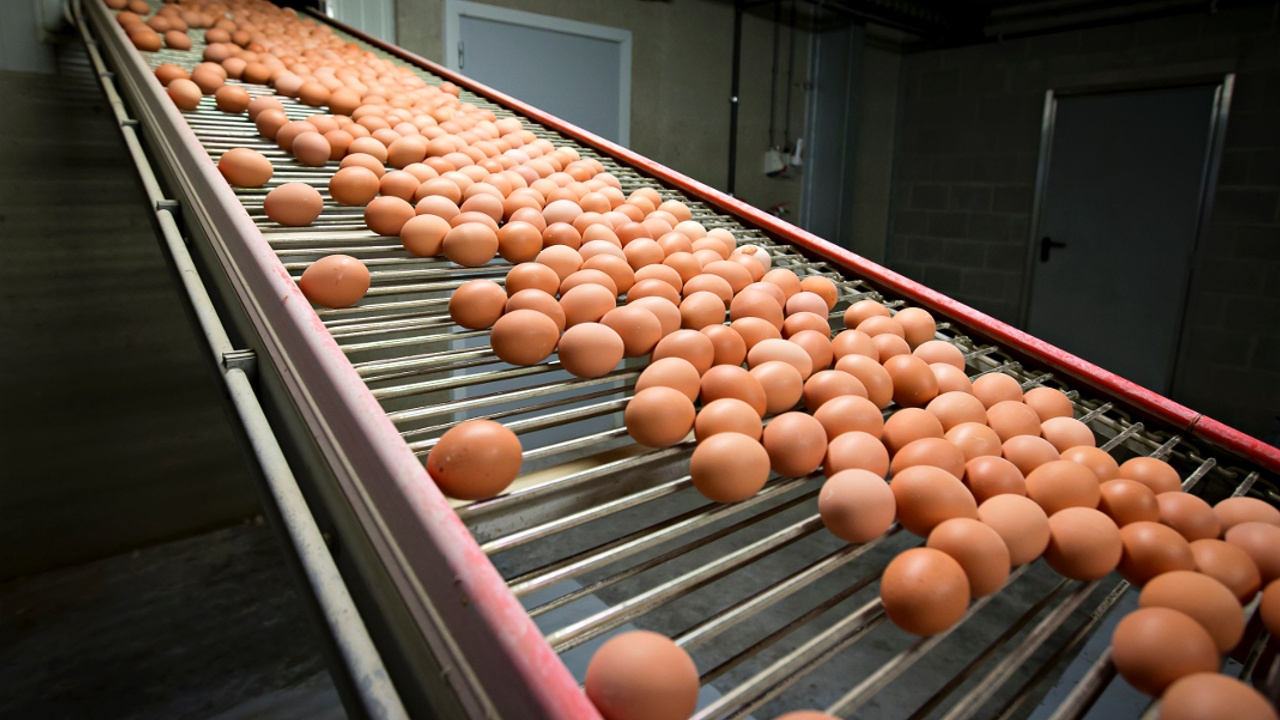 Скандал с куриными яйцами в ЕС: фермеры ждут падения